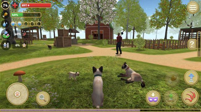 cat simulator 2020 4