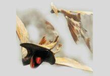 Monster Hunter Stories 2: Cephalos Location Guide